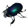 scarabaeuz